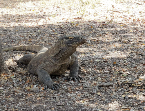 Komodo Island National Park    Closing Soon